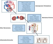 Major pathophysiological mechanisms for the development of cardiac and vascular surgery–associated acute kidney injury (CVS‐AKI).