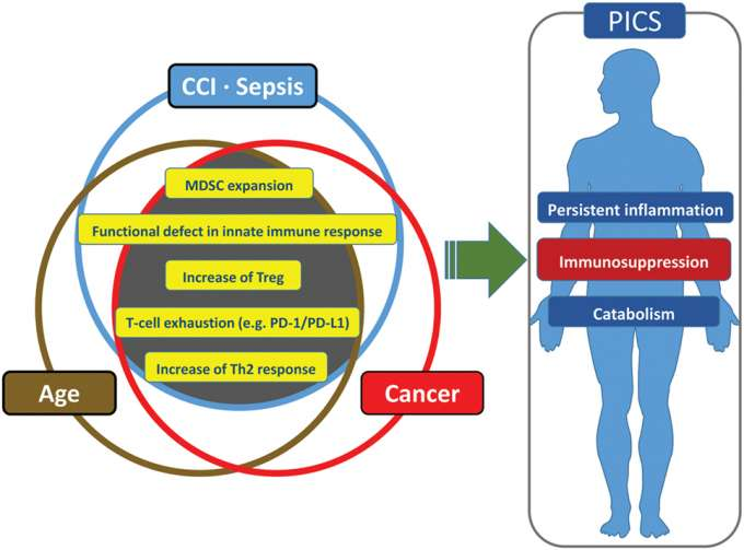 Diagram showing symptoms of sepsis, cancer, and advanced age as persistent inflammation, immunosuppression, and catabolism.